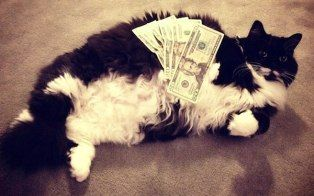 "Tumblr blog ""Ca$h Cats"" showcases how the one ""purrcent"" really lives. We have 20 top feline photos for you."