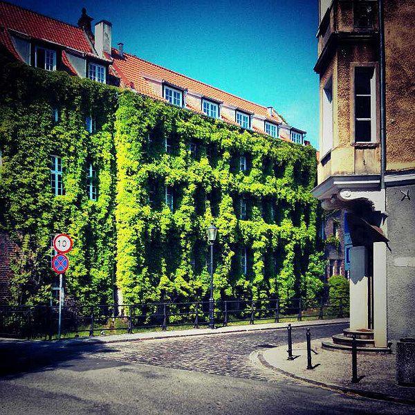 Green wall in Gdansk