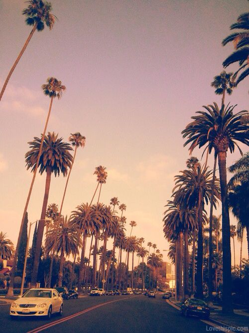 California Tumblr Photography Palm Trees Sunset