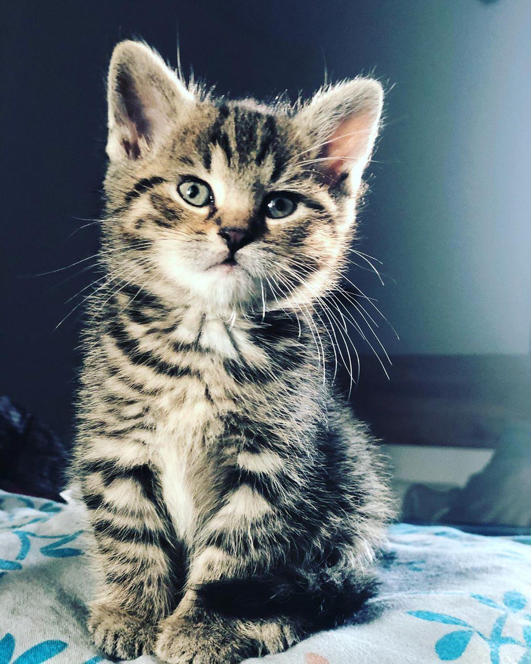 Ms Daisy Cats Catsofinstagram Catstagram Kitten Kittens Daisycat Mourek Czechcat Roztomilostsama Cats Of Instagram Cat Day Cats