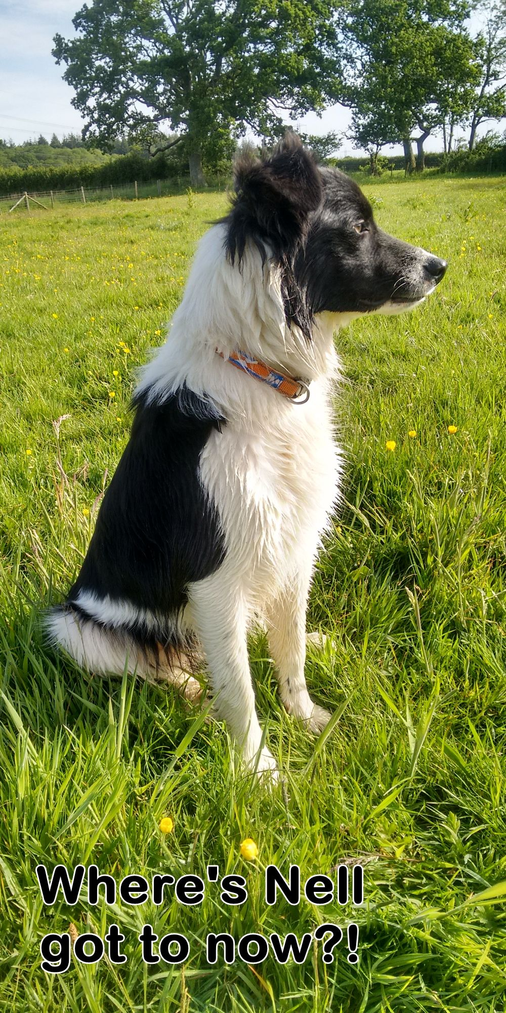 Young Chase The Border Collie Looking Towards His Beagle Lab Mate