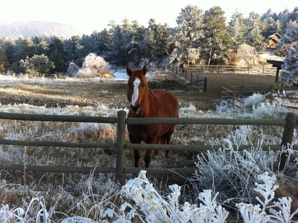 Rent to Own   Horses, Animals, Rent