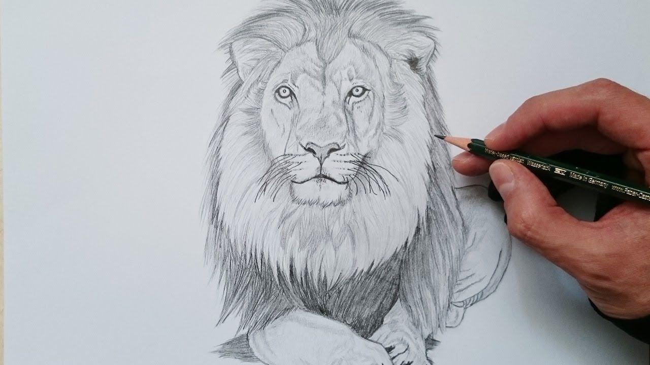Como Dibujar Un Leon Realista Paso A Paso Youtube Como Dibujar Dibujos A Lapiz Arte De Acuarela