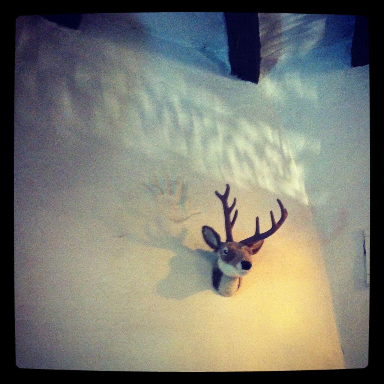 Our Spanish reindeer...