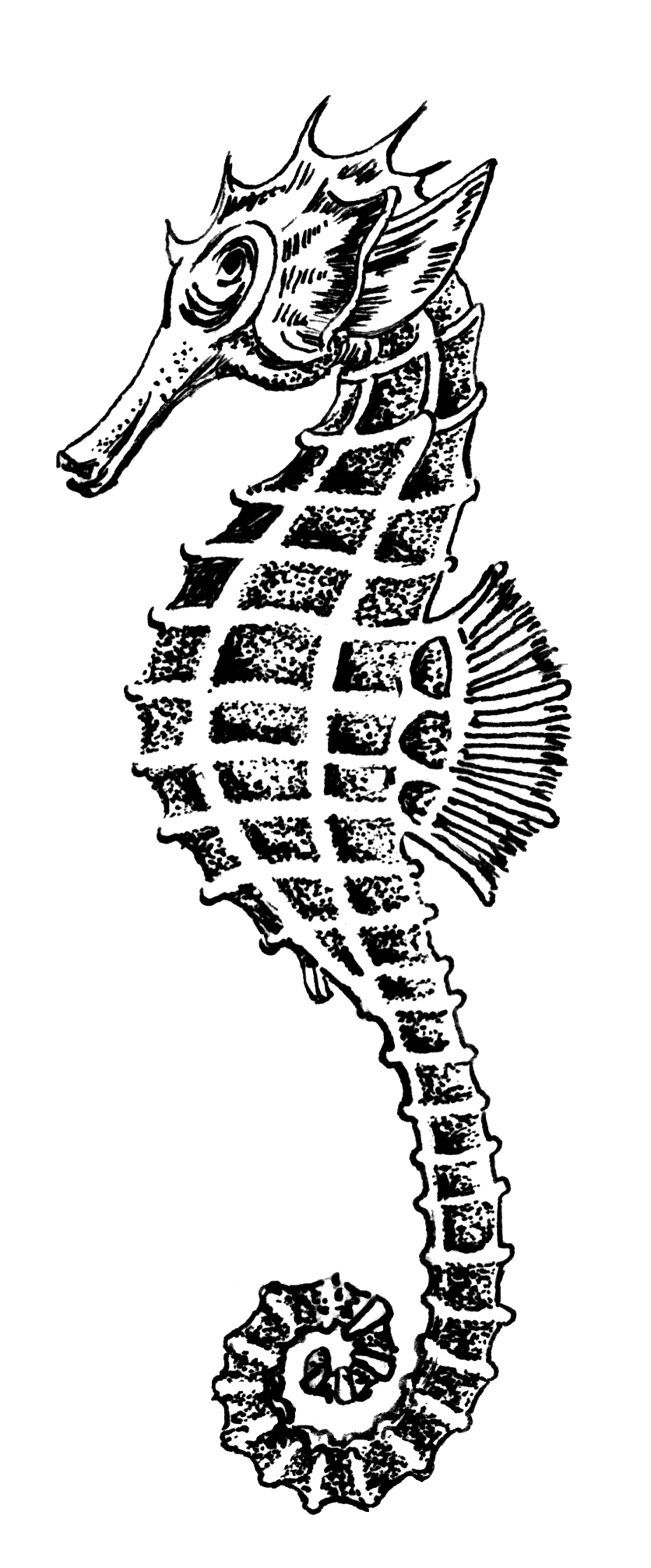 File Sea Horse 1 Psf S 820006 Png Wikimedia Commons Seahorse Art Seahorse Painting Seahorse Drawing