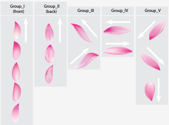 Image Result For Lotus Flower Petals Ref Lily Pad Lotus Flower