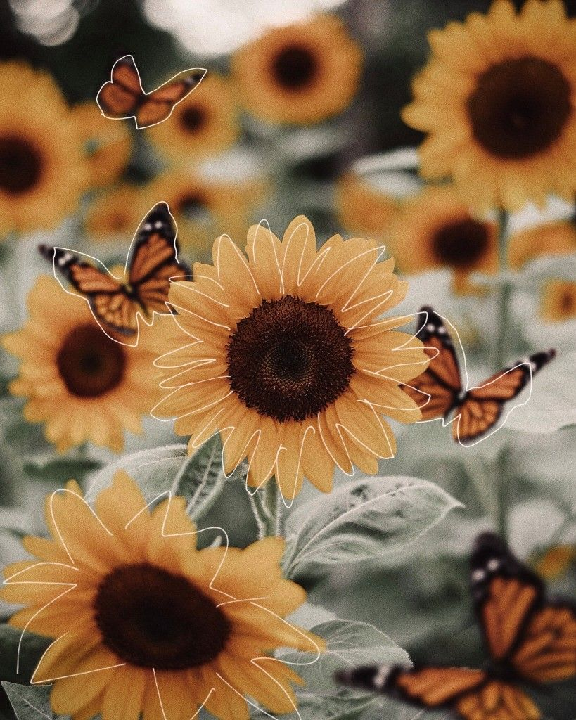 Sunflower Yellow Aesthetic Pastel Sunflower Wallpaper Iphone Wallpaper Yellow