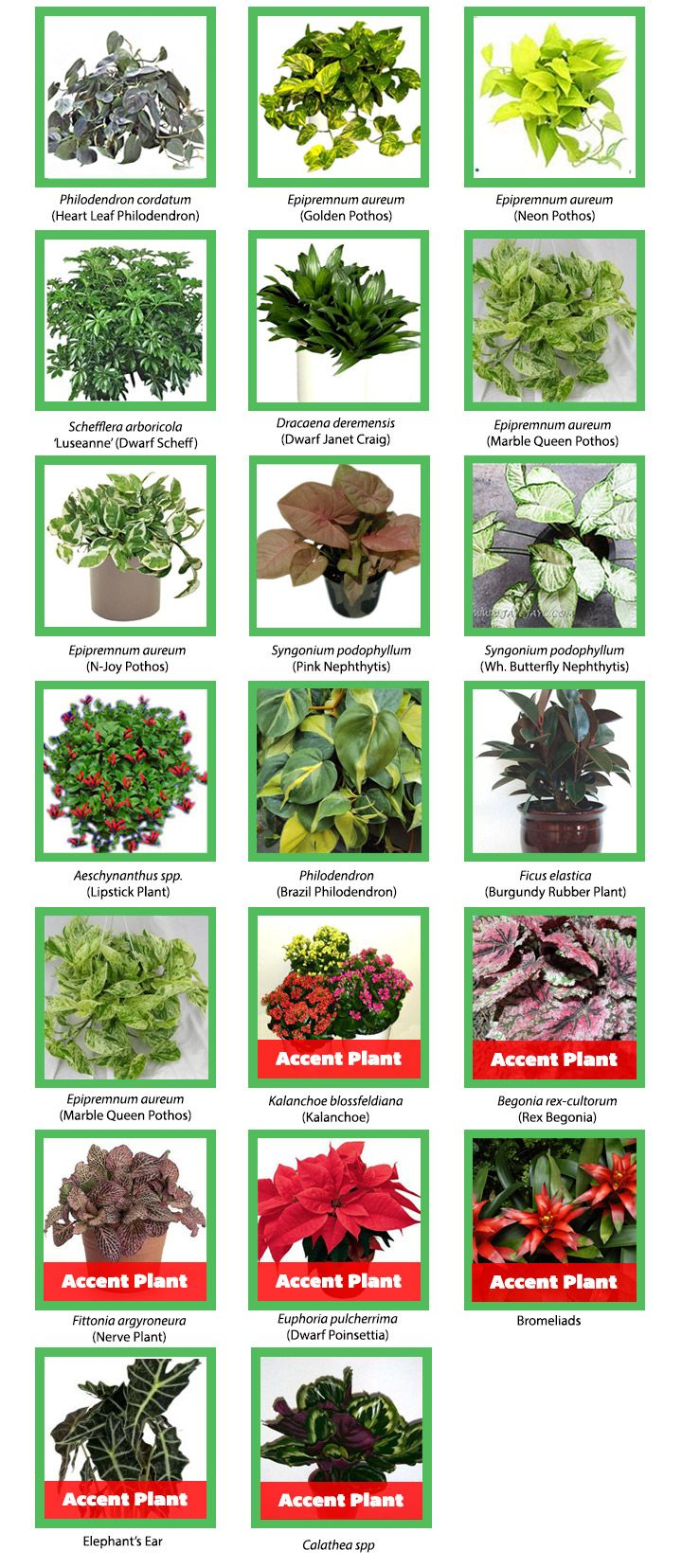 Begonia Waterfall Kopen Plant Recommendations Green Wall Plant Wall Plants Types Of