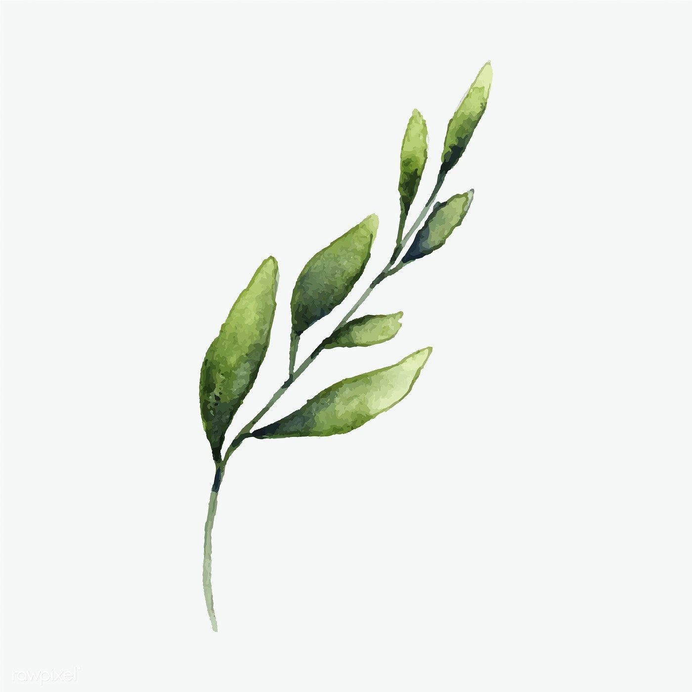 Hand Drawn Olive Branch Watercolor Style Vector Free Image By Rawpixel Com How To Draw Hands Olive Branch Art Olive Branch