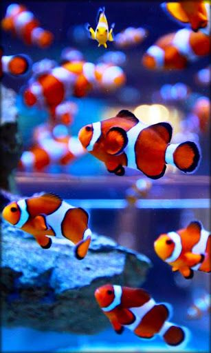 Aquarium Live Wallpaper, a fantastic live wallpaper with colorful fish swimming across your phone screen! Make your smart phone serene and peaceful!