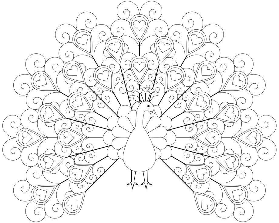 Pin de Coloring Fun en Birds   Pinterest