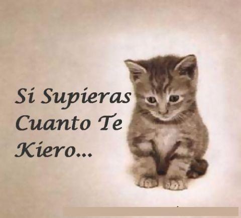 Gatitos Enamorados Frases Molonas Pinterest Gatos Amor Y