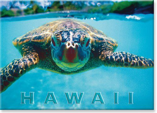 Hawaiian Art Collectible Refrigerator Magnet Turtle Honu