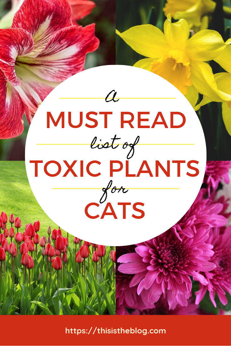 A Must Read List Of Toxic Plants For Cats In 2020 Toxic Plants For Cats Cat Plants Cat Safe Plants