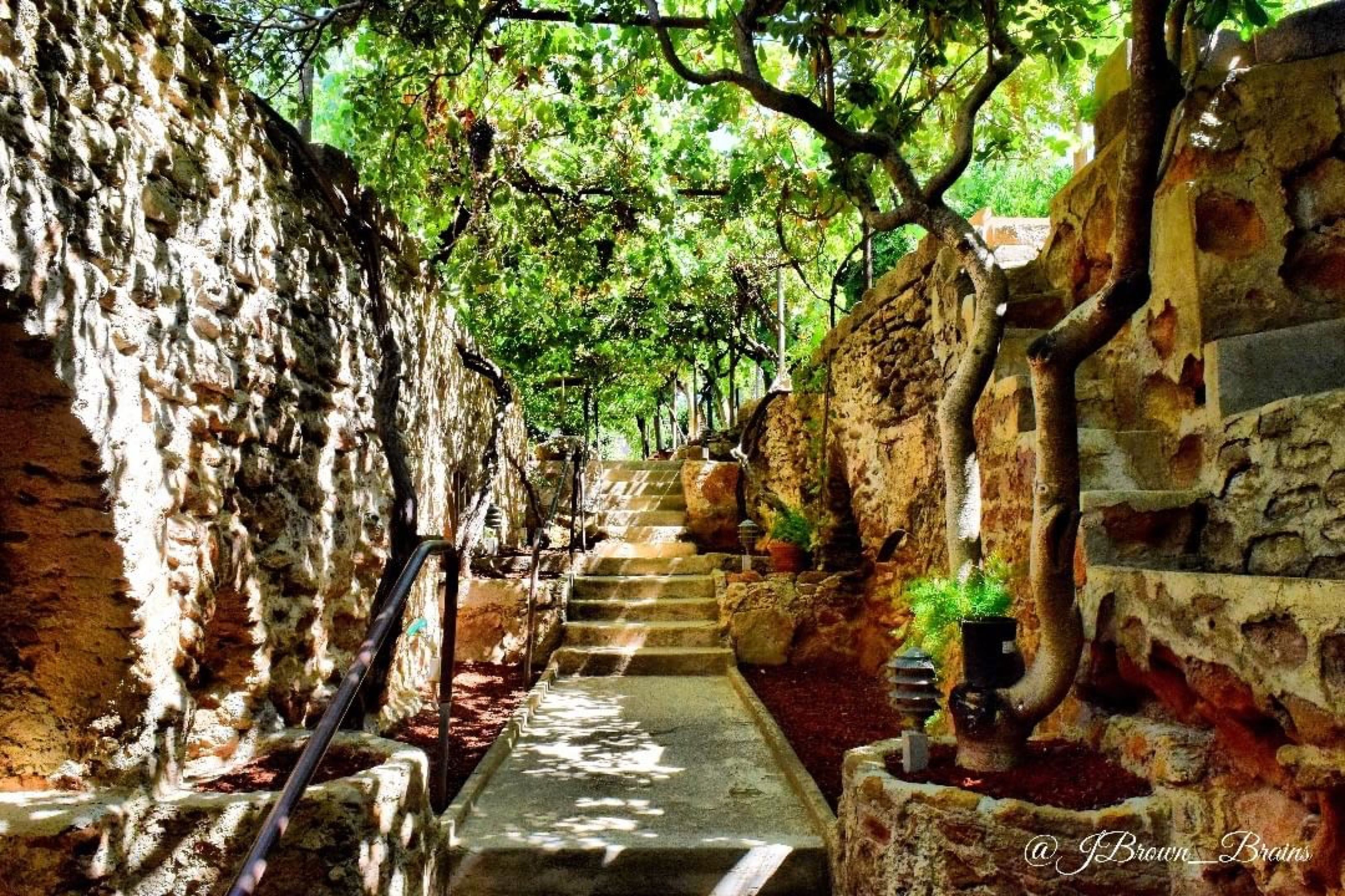 Discover the beauty of Fresno\'s underground garden\'s | Things To Do ...