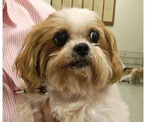 Spotlight Sunday Sweet Senior Dog Angie Need A Home Adoptable