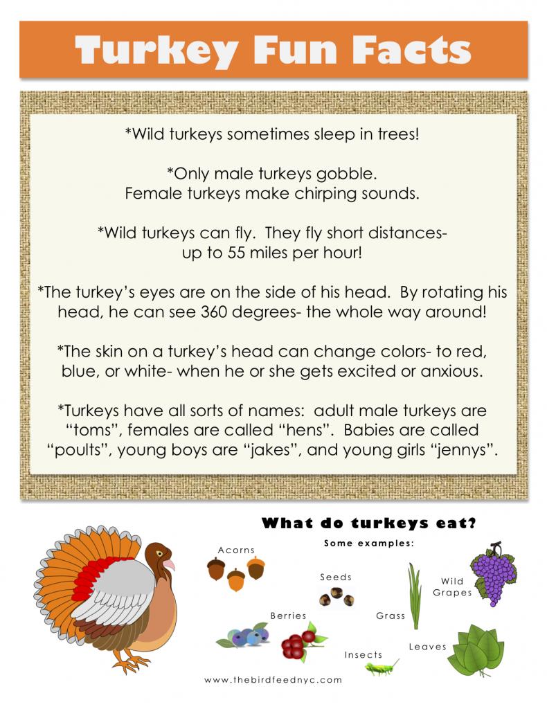 Thanksgiving Printable:  Turkey Fun Facts