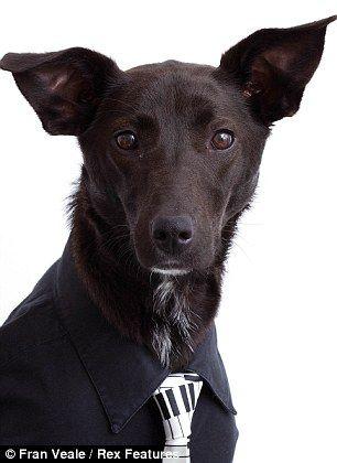 Pin de VOZANIMAUX com en Photographie de chiens | Dogs, Dog