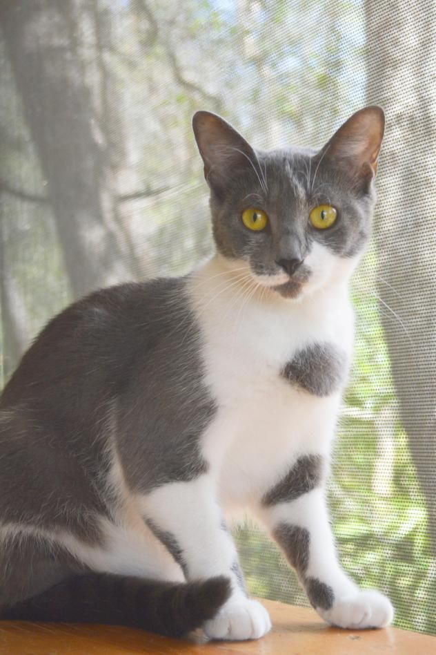 I Found Smokey On Wanting Rescue Adoptable Theyre Too Cute
