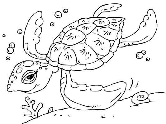 A beautiful sea-turtle for you to color in. You\'ll find lots more ...