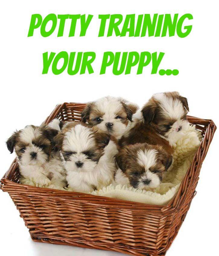 A Pel Of Adorable Shih Tzu Puppies Click For Dog Training Secrets Using Hands