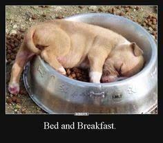 Bildergebnis Für Lustige Hunde Bilder Mit Spruch Humor