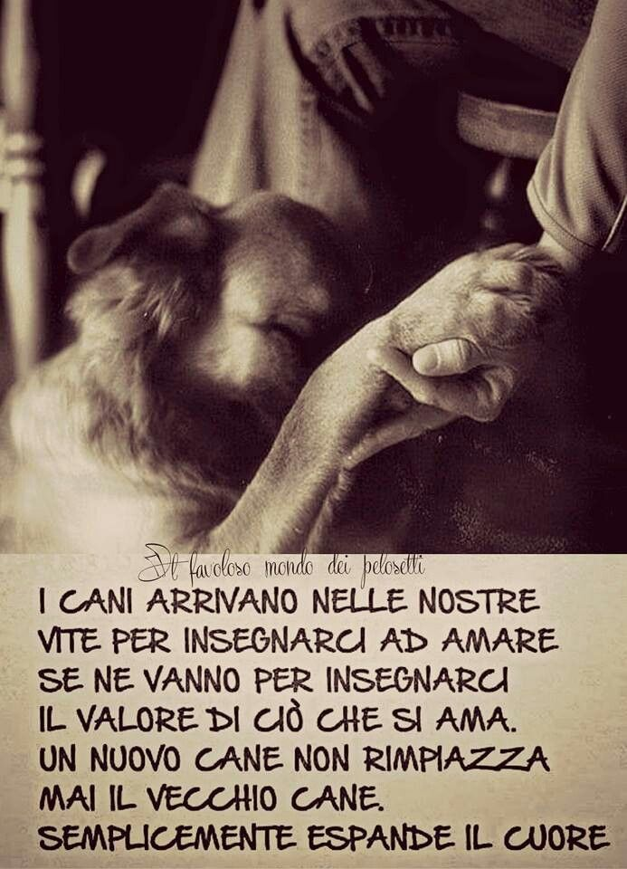 Amore Animale Frasi Dog Quotes Cute Cats Dogs Big Puppies
