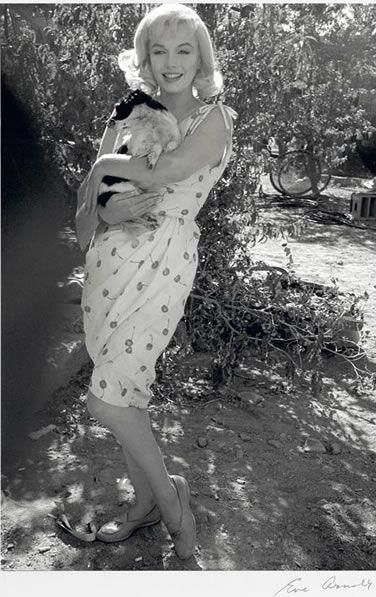 Marilyn Monroe: Dog Lover   Marilyn monroe photos, Marilyn monroe ...