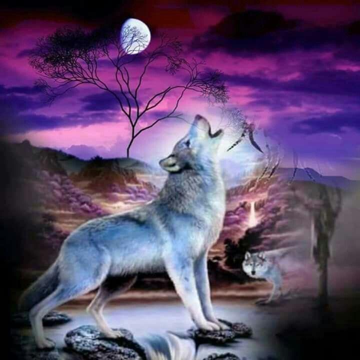 Pin von Tanya Ellington auf Wolves and Indians | Pinterest | Wolf ...