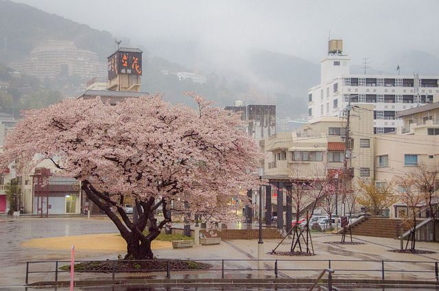 Cherry Blossoms In Japan And Spring Colors Around The World Ever In Transit Cherry Blossom Japan Cherry Blossom Japan