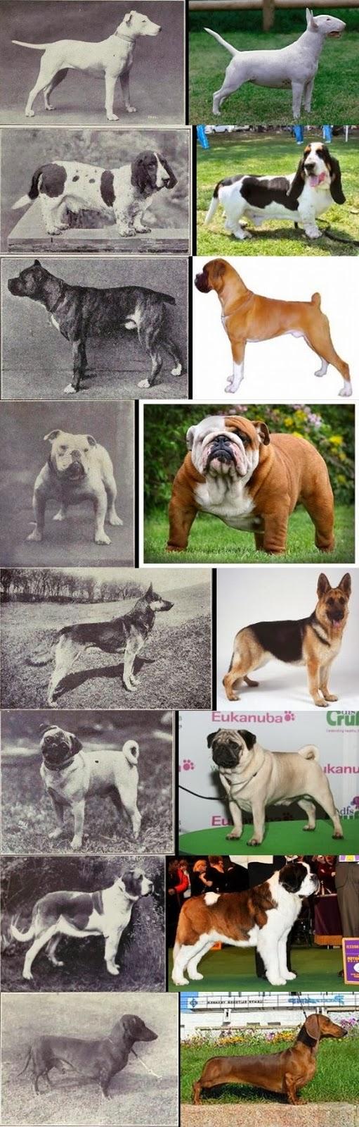 The Blog Pedigree Dog Dog Breeds Dog Breed Photos