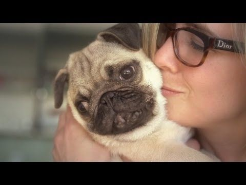 Facts That Prove Pugs Are The Best Breed Ever Pugnacious Cute
