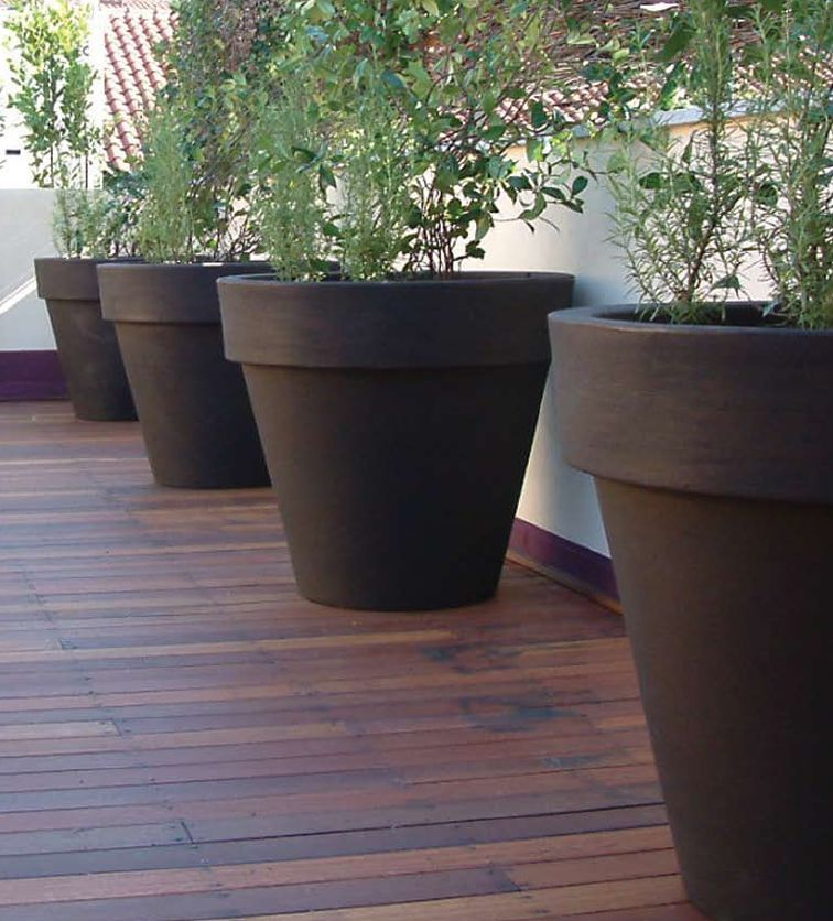 the home and office garden for the larger specimen plants a wide