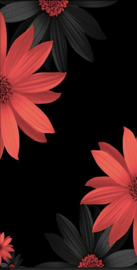 Pin By Viro On Phone Desktop Wallpaper Backgrounds Flowers Black Background Flower Wallpaper Red Wallpaper
