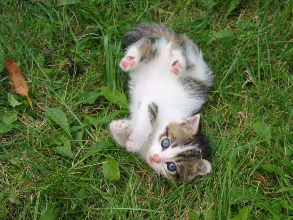 Rolling Around Cute Animal Pictures Cats Animals