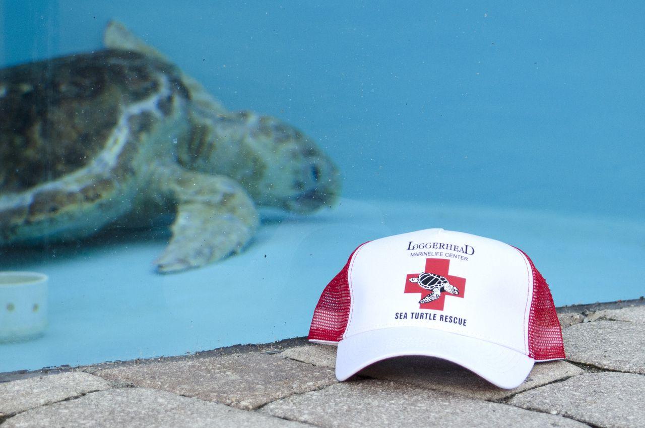 8e396d47078 LMC Sea Turtle Rescue Trucker Hat - loggerhead