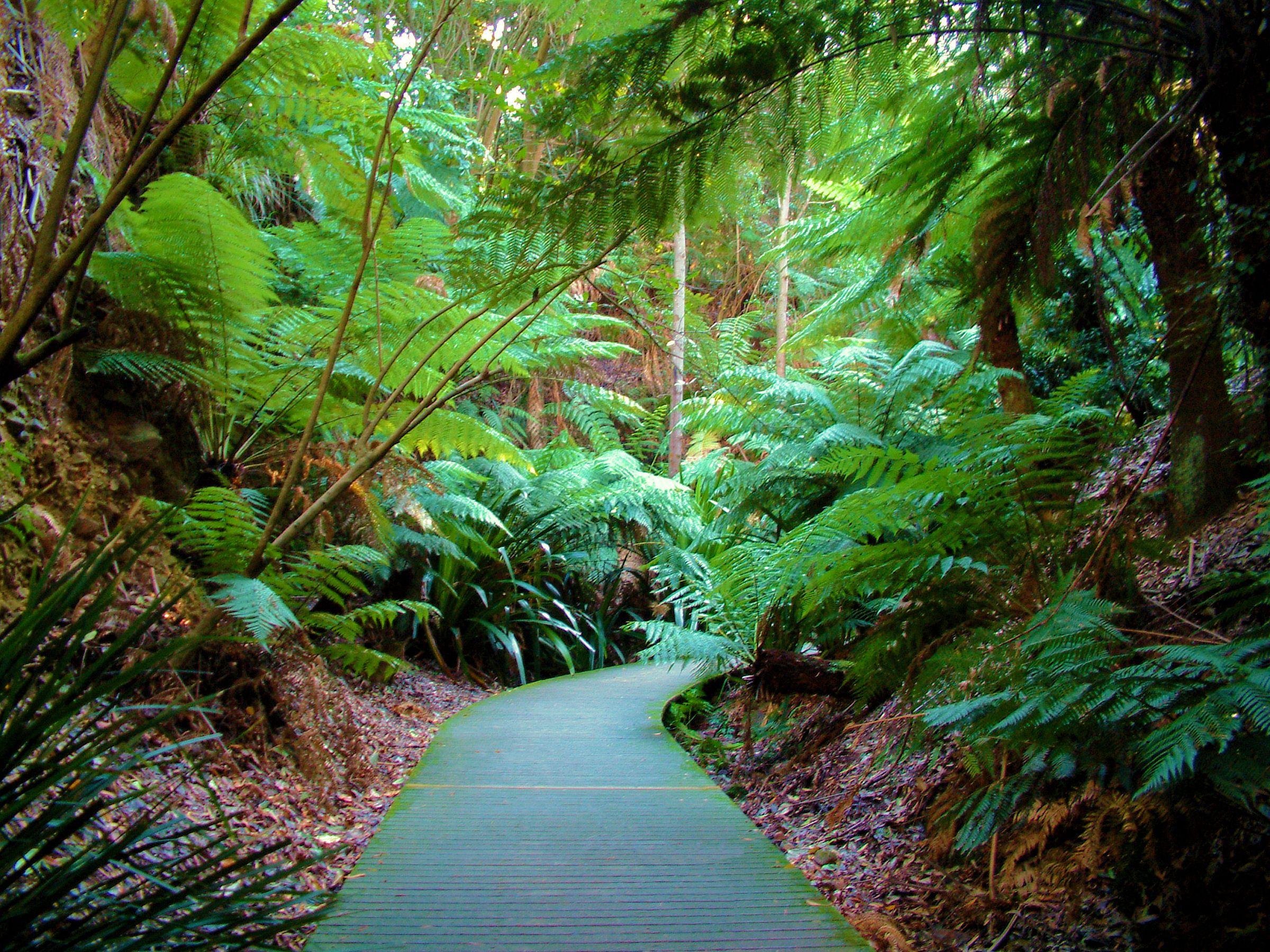 Rainforest Walk, Australia. Serenity GardenTropical ...