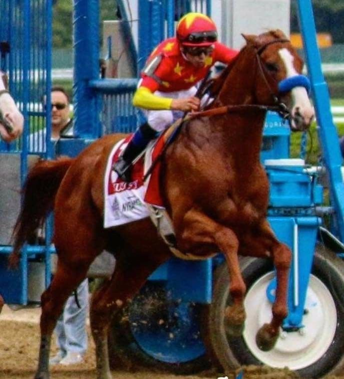 Justify Breaking From Gate Belmont 2018 Horse Racing