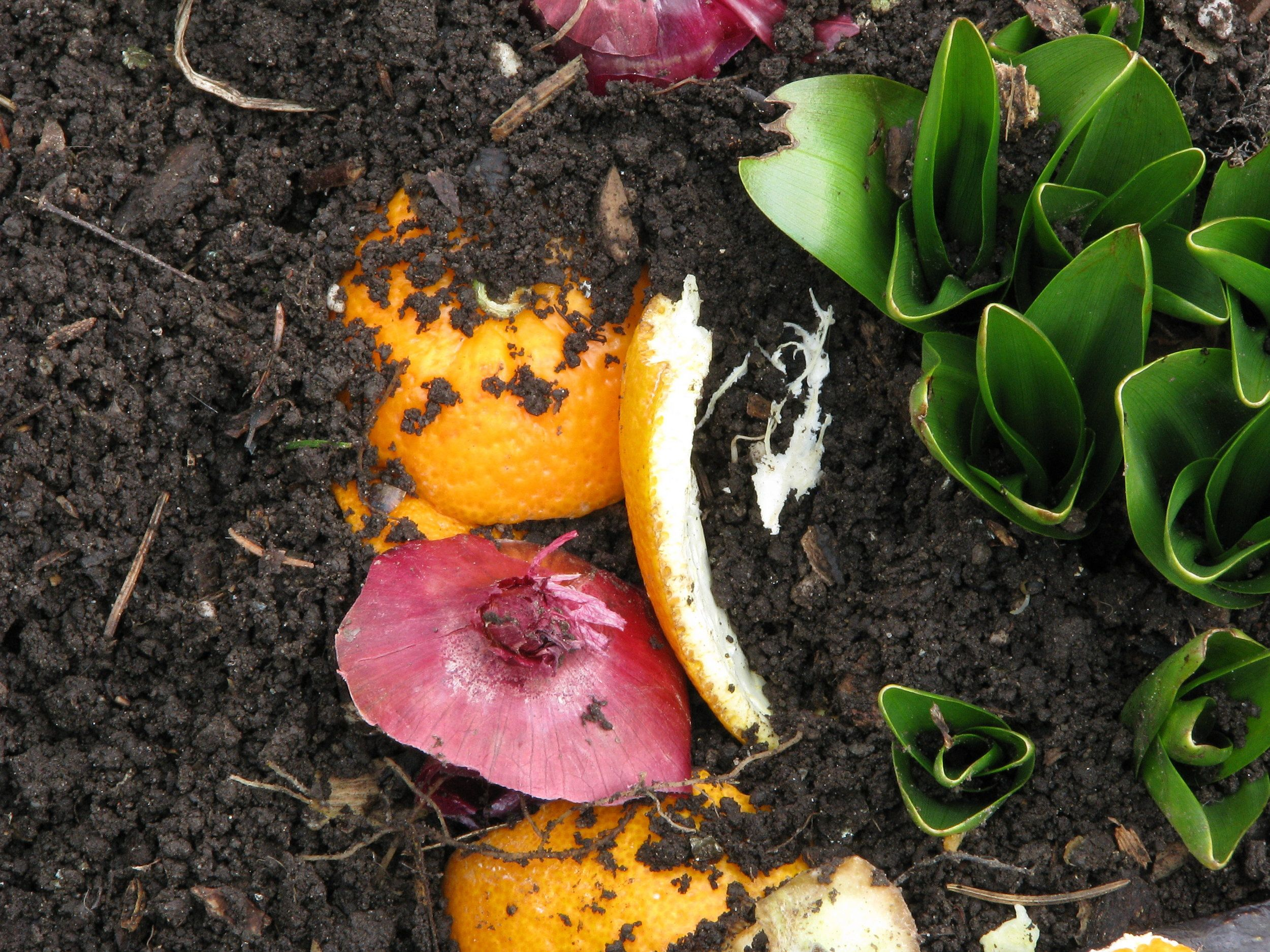 How to Make Compost at Home - CountryLife Blog