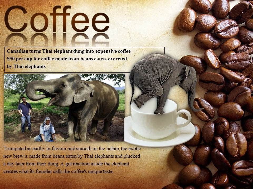 Would you pay $50 a pound for coffee that been popped out by an elephant?  http://www.cbc.ca/news/world/canadian-turns-thai-elephant-dung-into-expensive-coffee-1.1186566