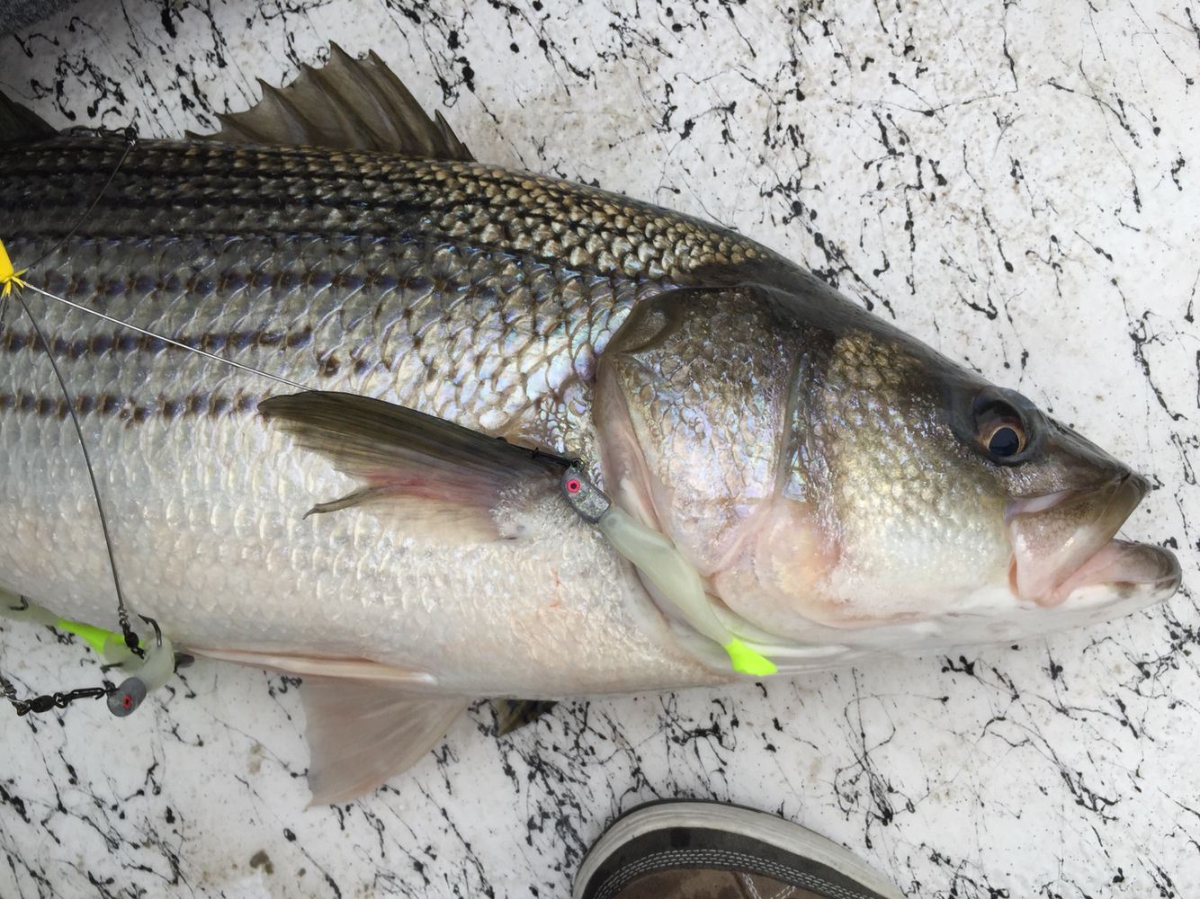 how to catch striped bass at night