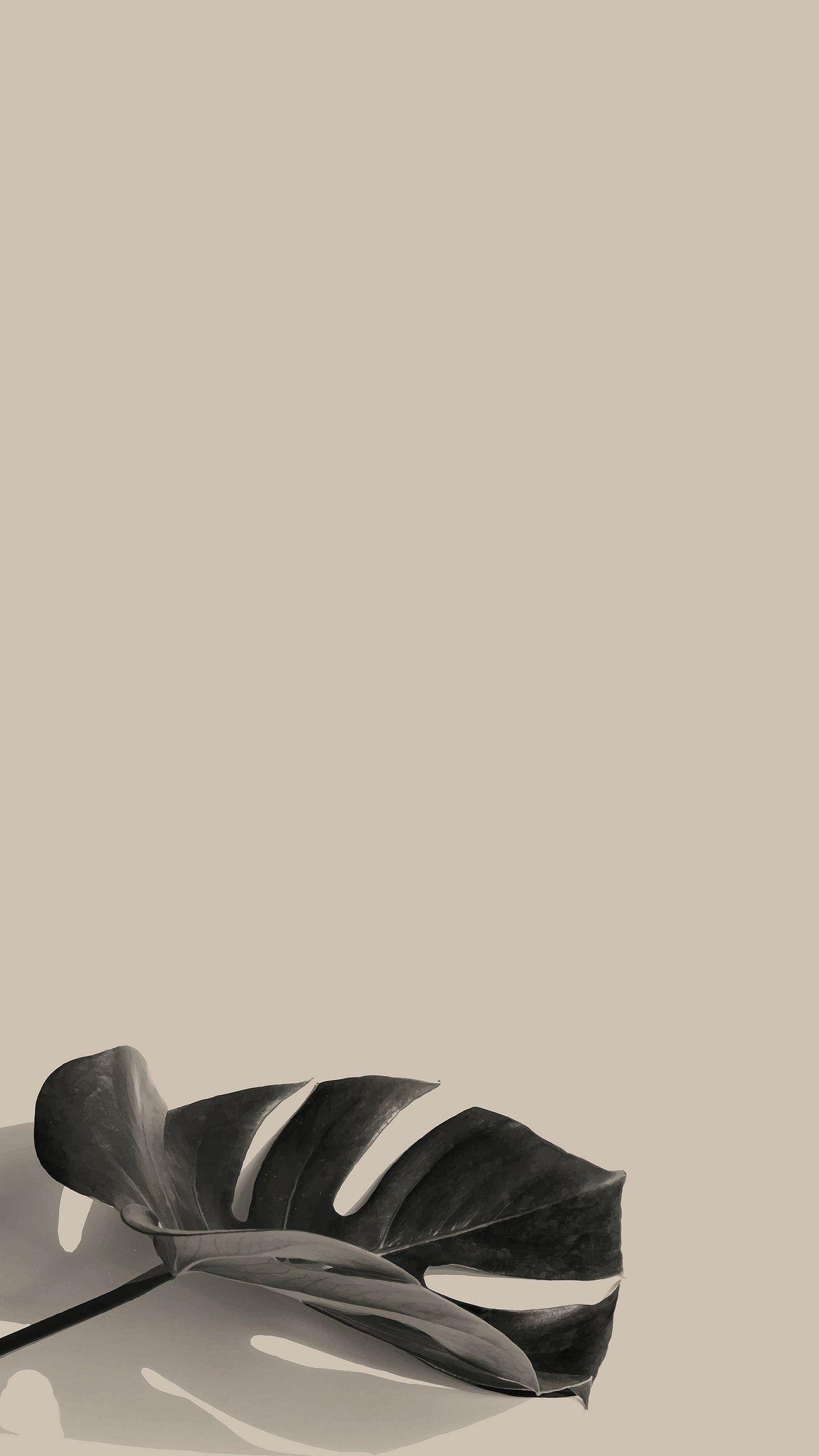 Download premium vector of Monstera leaf on a biege background design