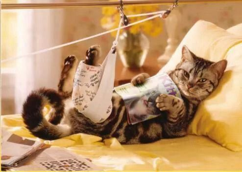 Cat In A Leg Cast Reading A Book Crazy Cats Funny Animals Cats And Kittens