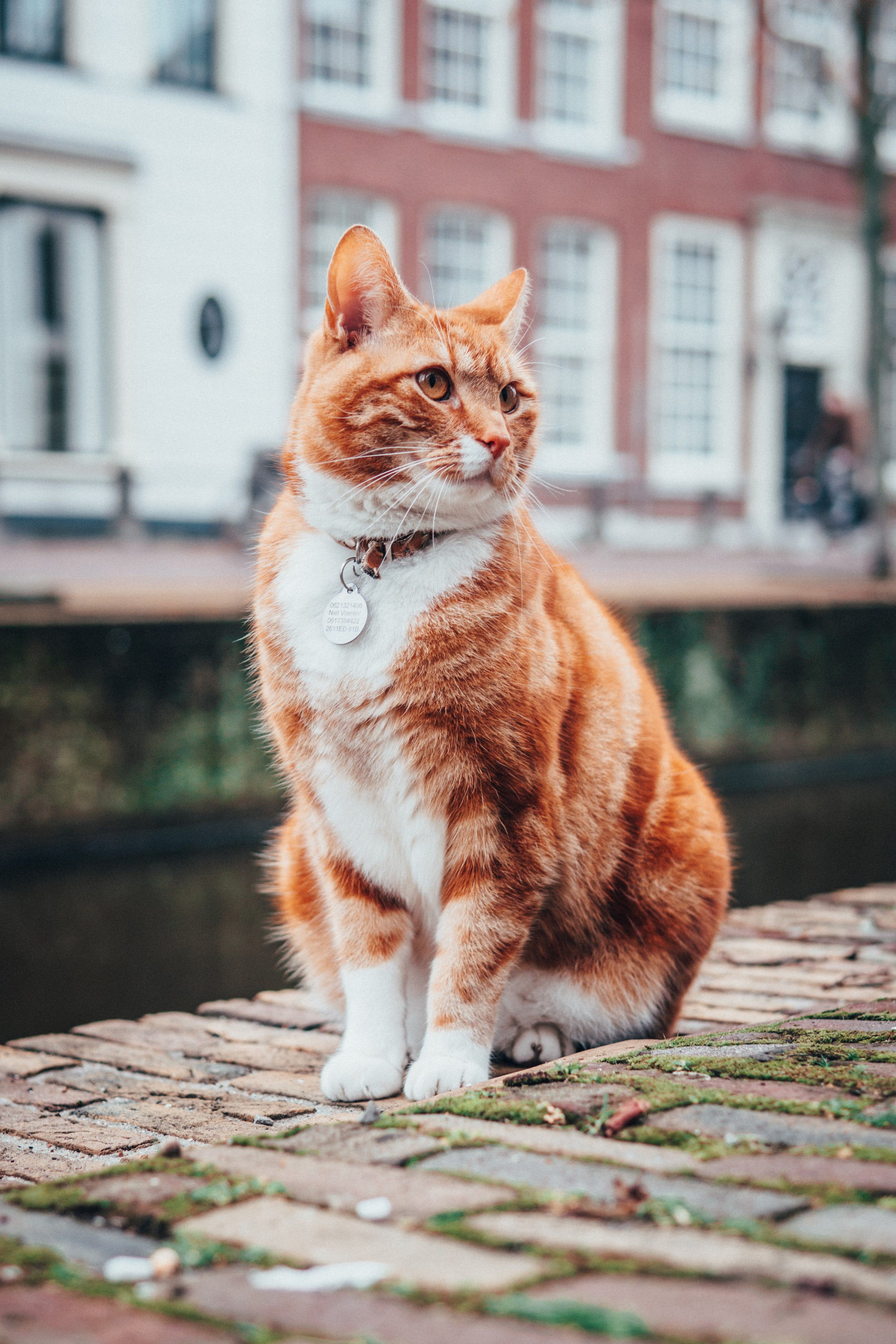 Selective Focus Photography Of Orange And White Tabby Cat White