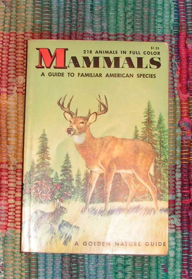 1955 a golden nature guide series mammals a guide to familiar rh pinterest com Little Golden Books The Golden Guide for Seniors