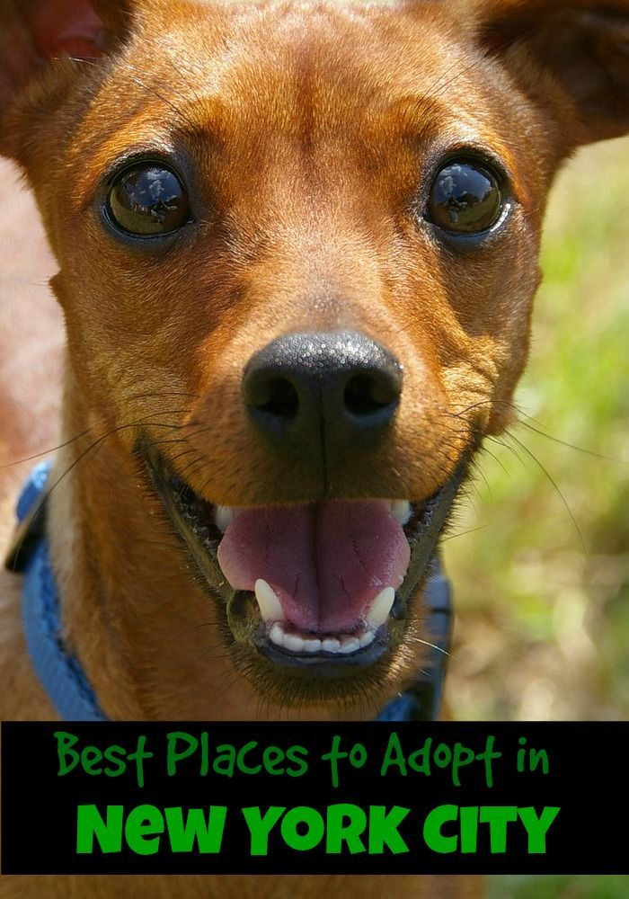 Best Places To Adopt In New York City Dog Adoption