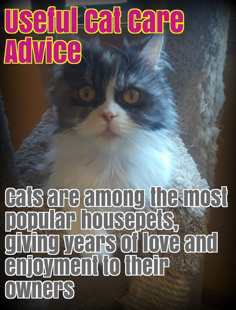 Some Active Cats Require Space For Games And Hunting While Calm Cats Such As Phlegmatic Long Haired Breeds Can Feel Great In A Smal Cat Care Calming Cat Cats