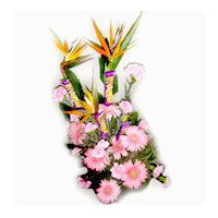 Bouquet Of Carnation And Bop With Munch Chocolate Send Online Flower Chocolate Cakes Flower Basket Flower Bun Flowers Online Flowers Bouquet Bunch Of Flowers