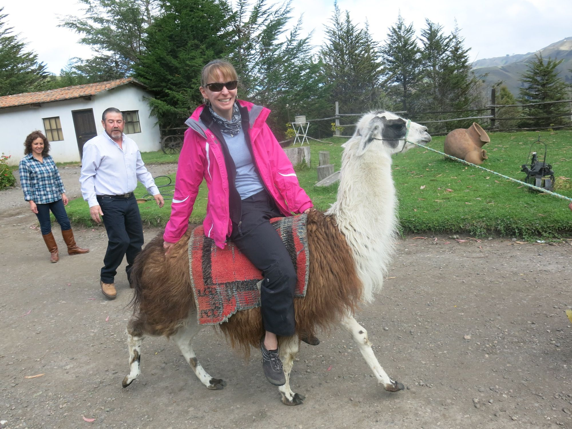 Can You Ride A Llama Trekking With Llamas Is Becoming More - If you hate humans you can now invite llamas to your wedding instead