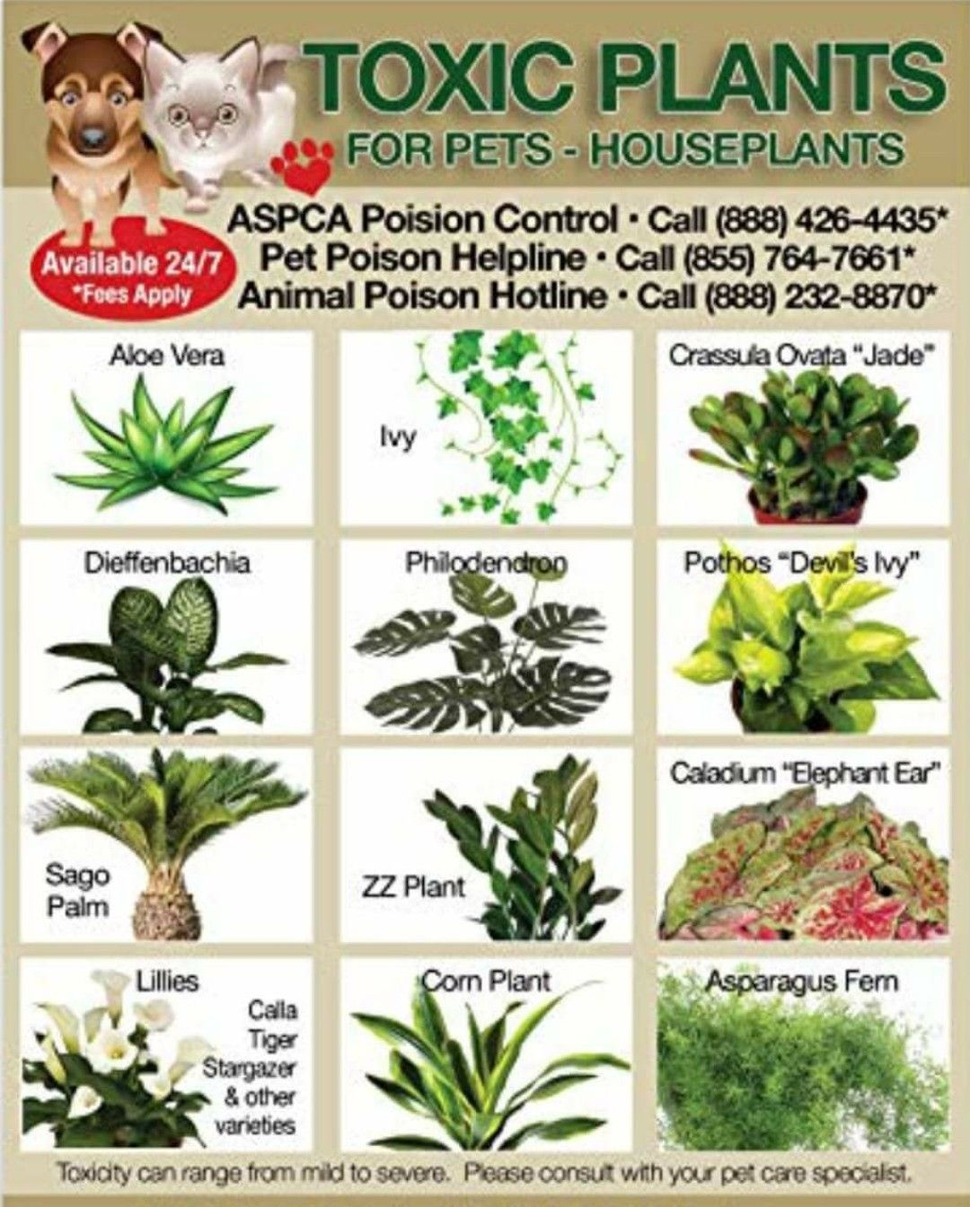 Pin By Toby Black On Healthy Pets Cat Plants Toxic Plants For Cats Plants